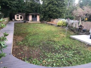 Shady Garden Lawn Before